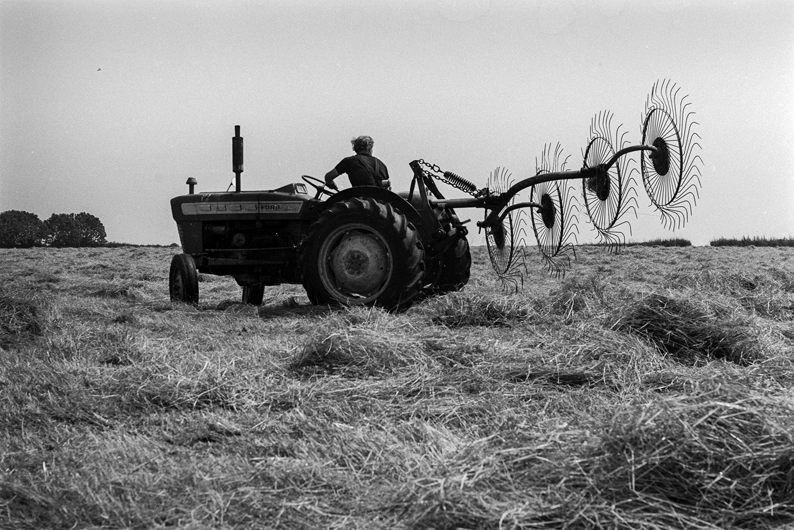 A man driving a tractor and hay whisk to turn hay, in a field at Mill Road Farm, Beaford.