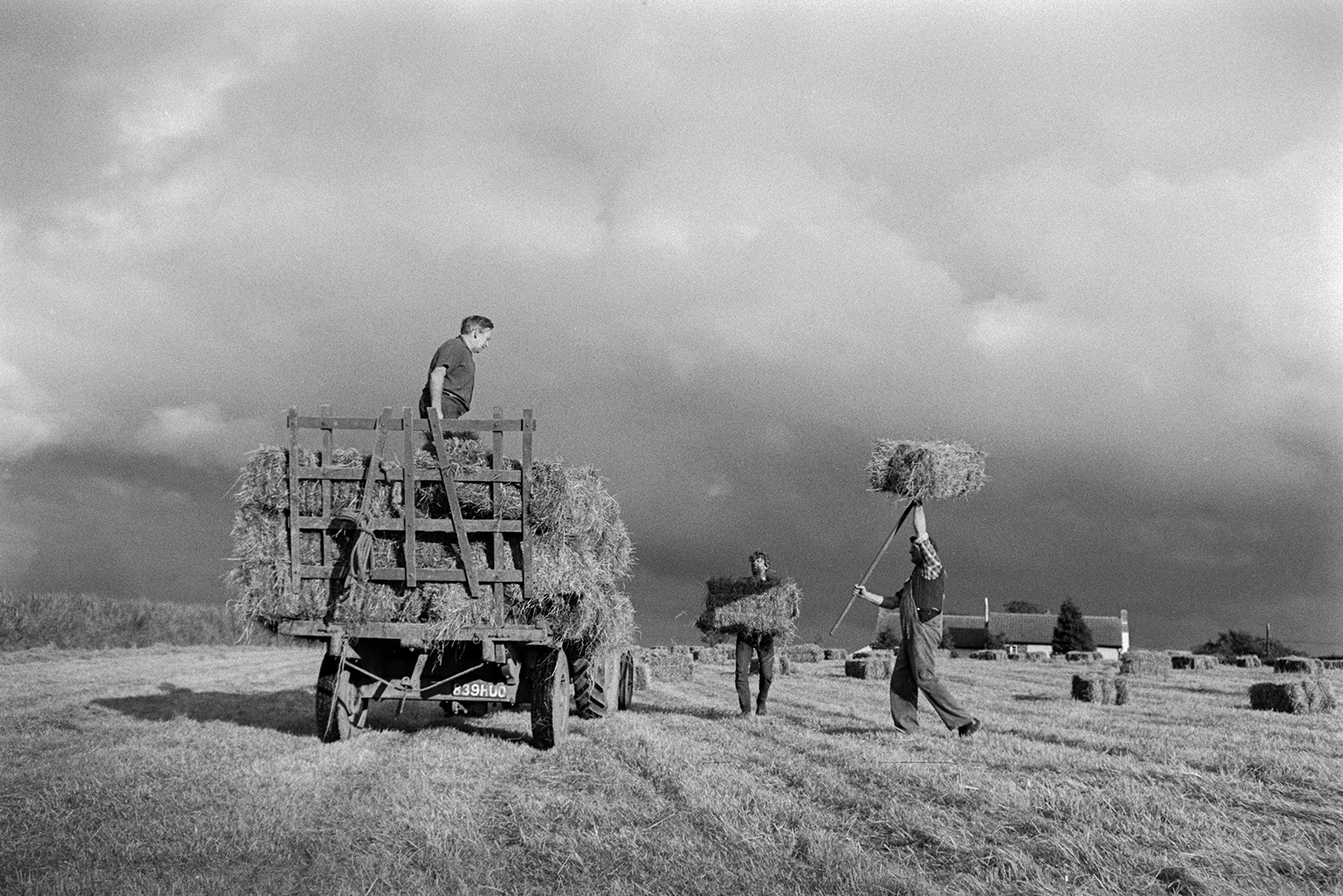 Men loading hay bales onto a trailer using pitchforks, in a sunny field at Mill Road Farm, Beaford.