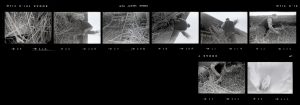 Contact Sheet 48 by