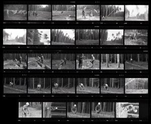 Contact Sheet 50 by