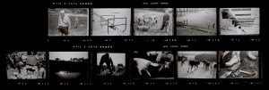 Contact Sheet 65 by