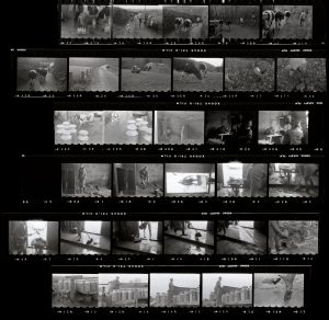 Contact Sheet 68 by