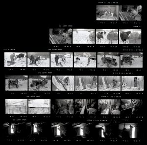 Contact Sheet 69 by