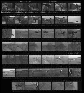 Contact Sheet 113 by