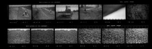 Contact Sheet 277 by