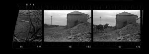 Contact Sheet 291 by