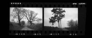 Contact Sheet 299 by