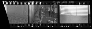 Contact Sheet 304 by