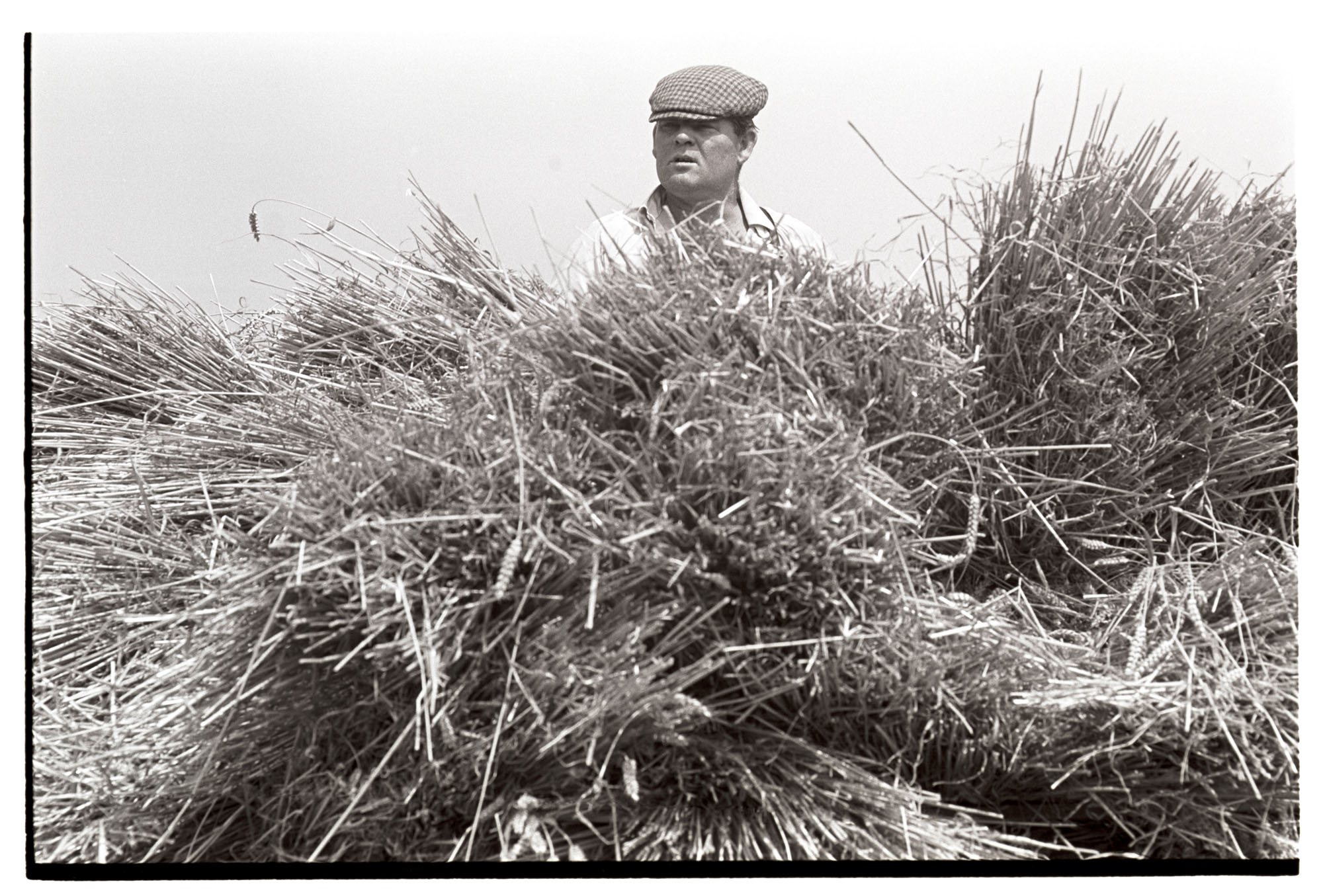 Farmer on load wheat.<br /> [Mr Lake, wearing a flat cap, stood on top of bundles of wheat, probably on a trailer, at Kiverleigh, Beaford.]