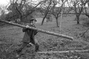 George Stevens cutting a pole to mend pens by James Ravilious