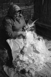 Mrs Doris Allin plucking a goose for Christmas dinner by James Ravilious