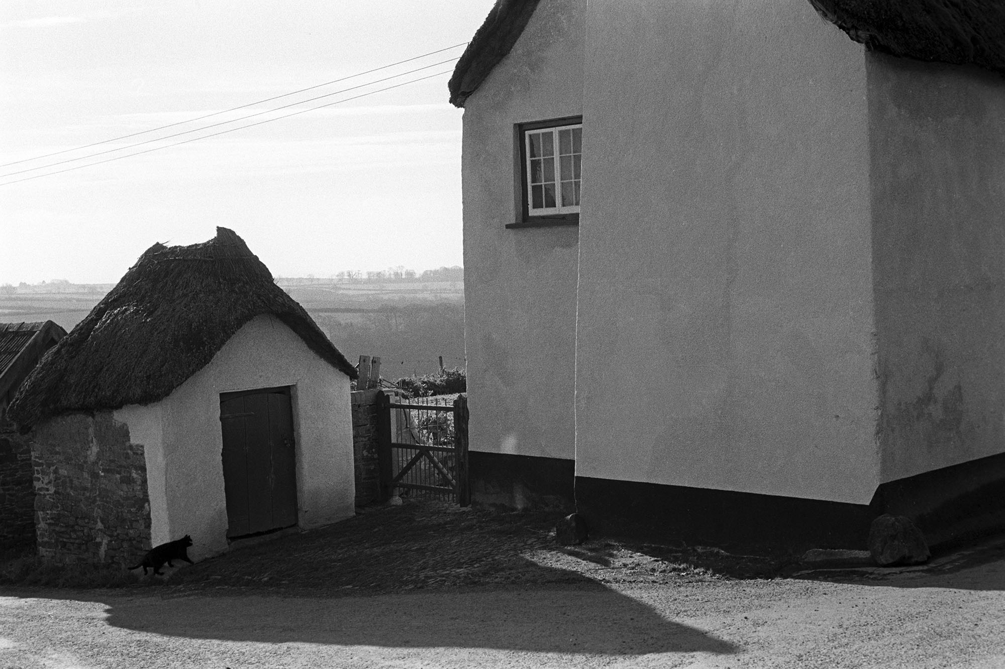 Thatched shed and cottage with cat.<br /> [A cat walking past a thatched shed next to a thatch cottage at Roborough. <br /> For more information see the 'Additional notes by James Ravilious' field.]