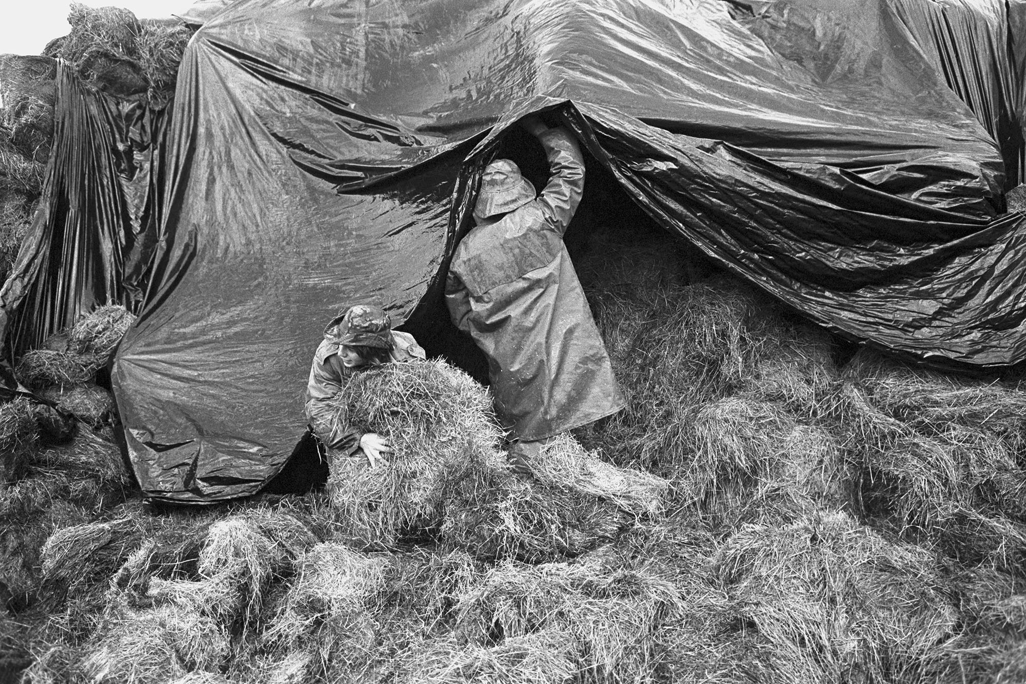 Loading hay in muddy farmyard, polythene cover.<br /> [A boy helping his father load hay onto a trailer to take to feed cattle at Lower Hewton, Okehampton. The hay is covered by a polythene sheet.]