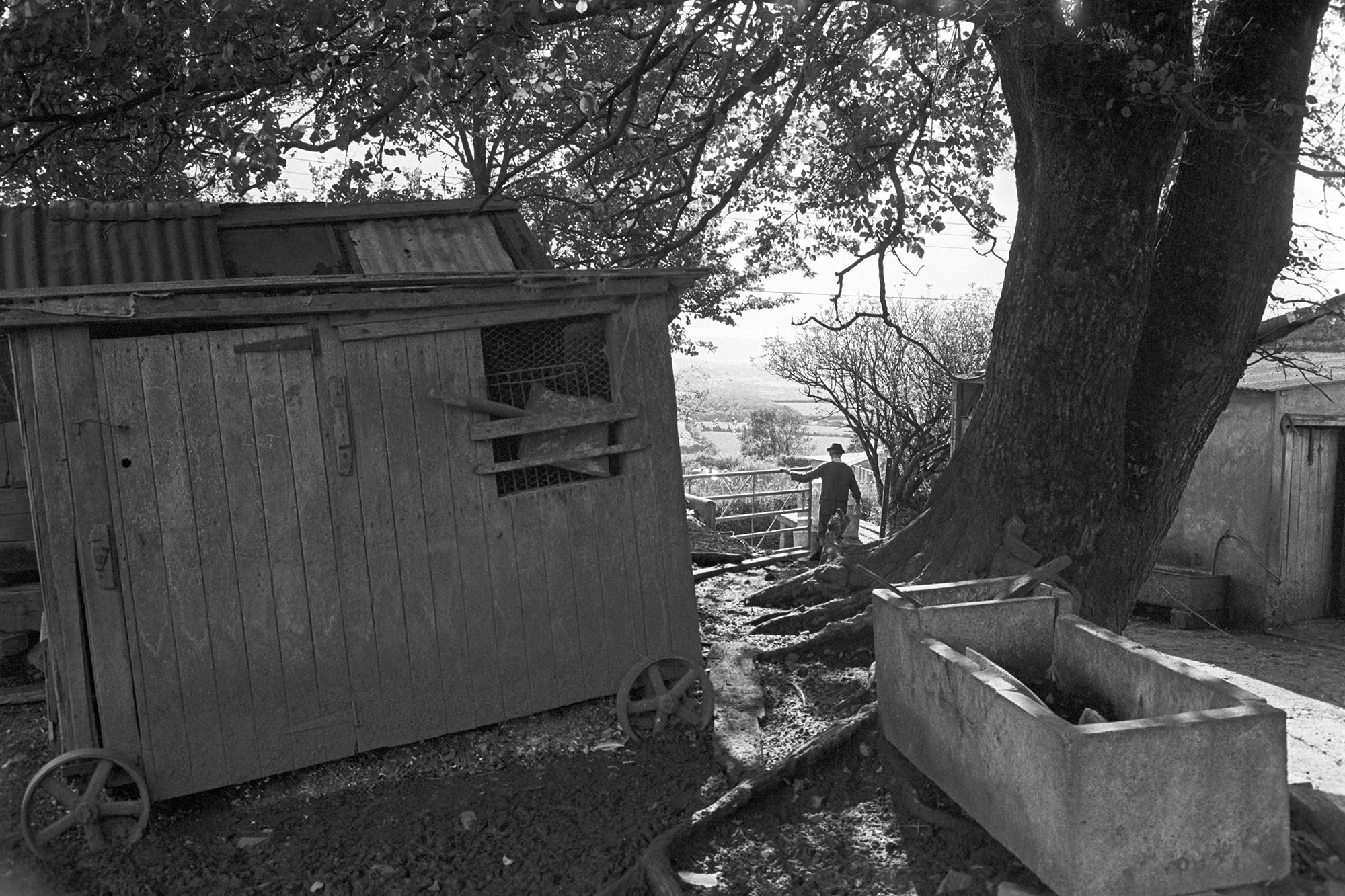 Farmyard chicken house and trough.<br /> [A farmyard with a trough and wooden hen house at Upcott, near Dolton. Fred Folland is resting on a gate to the farmyard.<br /> See the 'Additional Notes by James Ravilious' field for more information.]