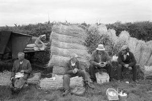 Reedcombers' tea-break