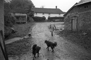 Harry Webber in the farmyard