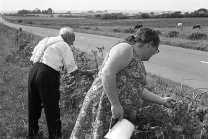 George Bird and Olive Bennett picking blackberries on Beaford Moor by James Ravilious