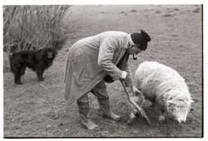 Archie Parkhouse making a ewe accept her lamb by James Ravilious
