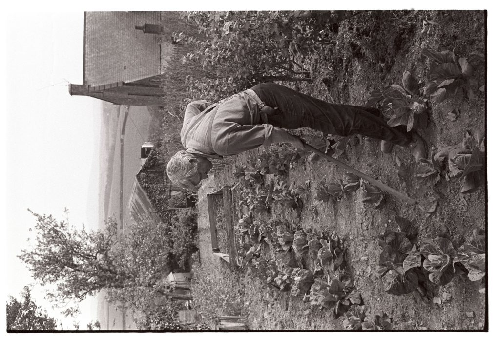 Ben Stanbury hoeing cabbages by James Ravilious