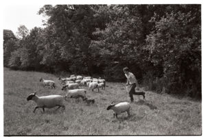 Graham Ward checking sheep by James Ravilious