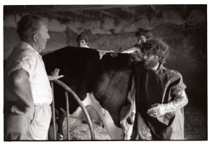 Vet with hand inside cow by James Ravilious