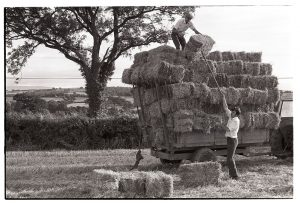 Loading straw on to a trailor by James Ravilious