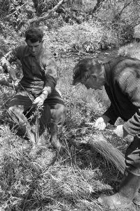 """Bill Folland and Bill Cooke """"skinning rods"""" - stripping willow for basket making by James Ravilious"""