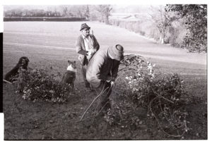Archie Parkhouse and Alf Pugsley bundling-up holly for Christmas decorations by James Ravilious
