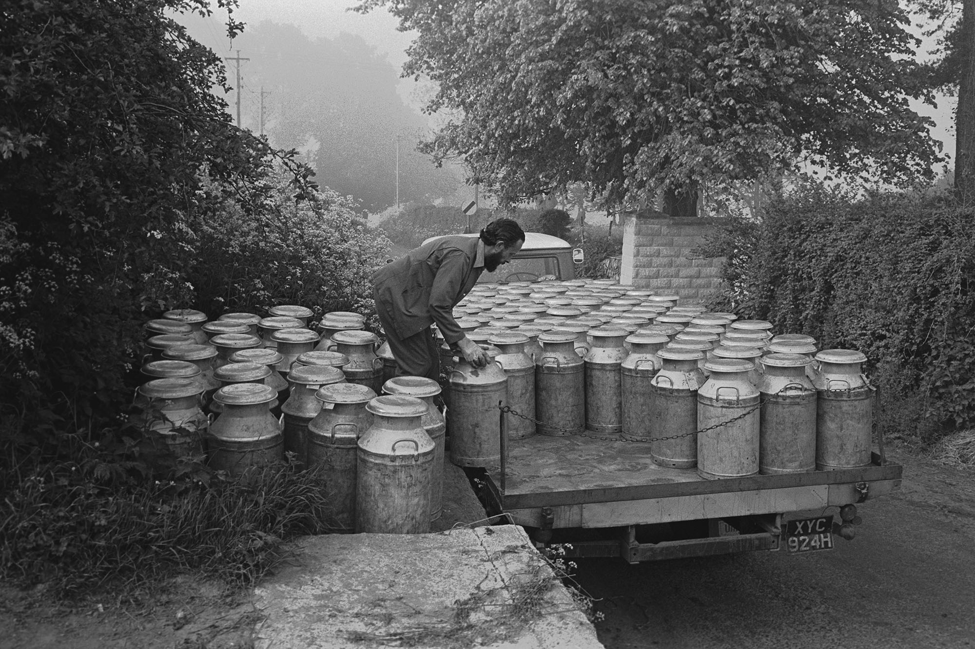 Man loading lorry with milk churns on to lorry from stand. <br /> [Fred Hooper, a milk lorry driver, loading milk churns onto his lorry from a stand in Sheepwash.]