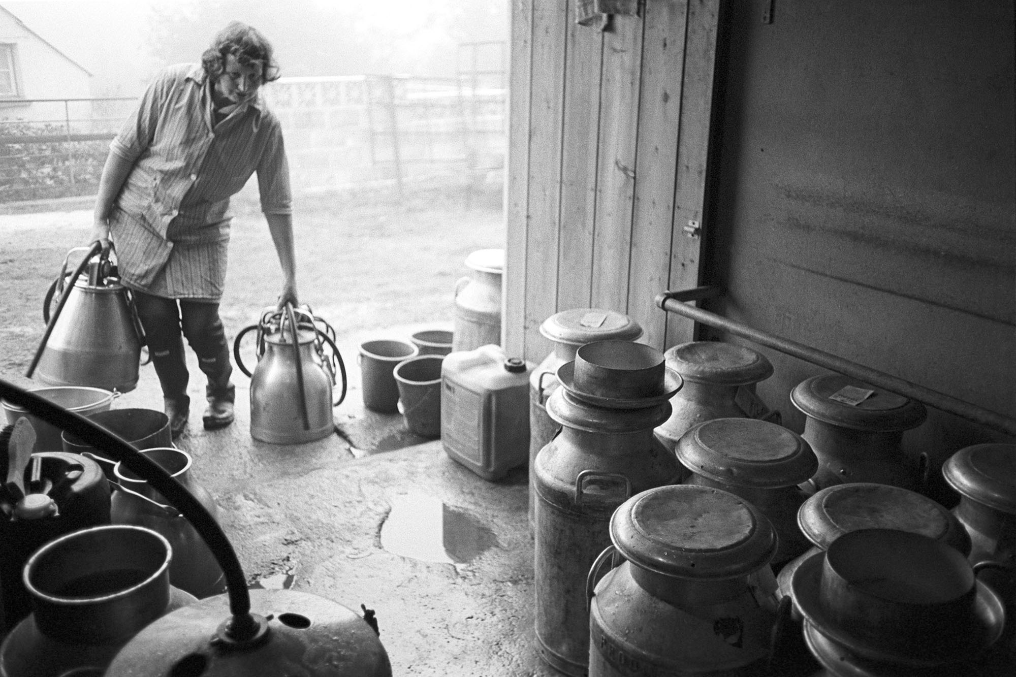 Farmers wife doing morning milking, churns and parlour with milking machine (bucket). <br /> [Valerie Medland doing the morning milking at Hall Court Farm, Petrockstowe. She is carrying milking machines and looking into a barn or dairy parlour with milk churns.]