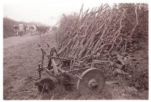 Dairy herd passing plough and woodpile by James Ravilious