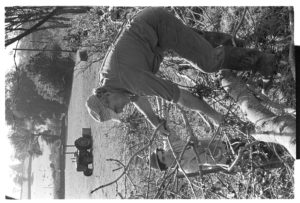 Stephen Squire and Alf Pugsley laying a hedge by James Ravilious