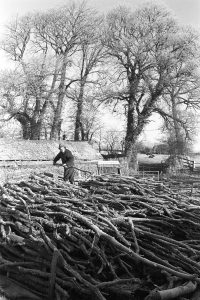 Stephen Squire sorting logs by James Ravilious