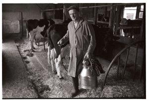Ken Adams milking by James Ravilious