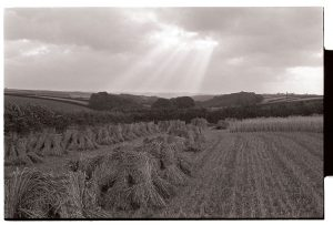 Cornfield near Riddlecombe by James Ravilious