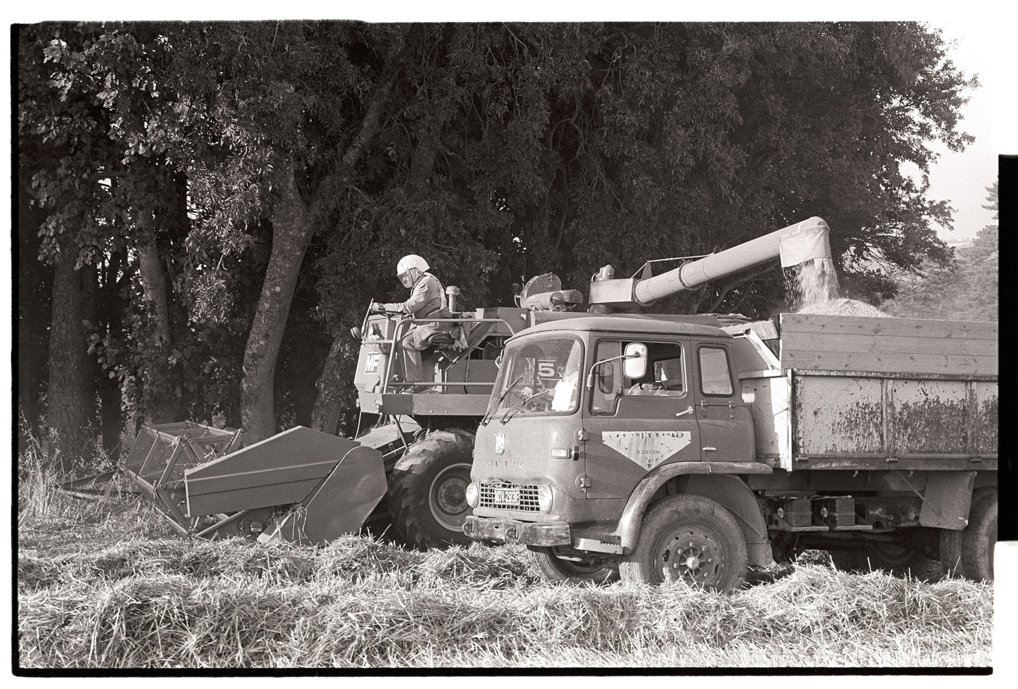 Combine harvester with driver wearing dust helmet, loading grain onto lorry. <br /> [Mr Rogers driving a combine harvester in a field at Huish Barton near Merton. He is wearing a dust helmet. The combine harvester is loading grain into a lorry.]