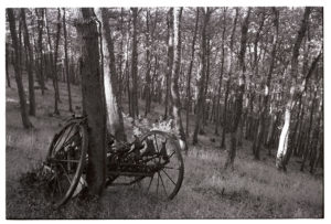 Abandoned seed drill in oak wood plantation by James Ravilious