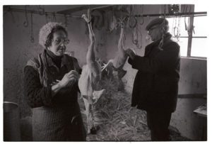 Couple plucking a turkey for Christmas by James Ravilious