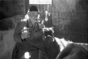 Archie Parkhouse and his cow by James Ravilious