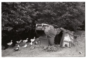 Geese beside upturned wreck of Baby Austin by James Ravilious