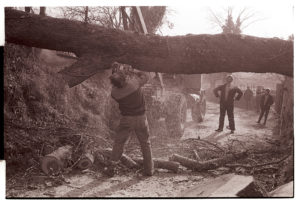 Cutting up a felled elm lying across the road by James Ravilious