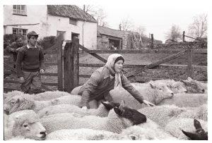 Herding sheep at Lower Langham by James Ravilious