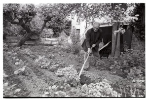 Jim Hutchins hoeing potatoes by James Ravilious