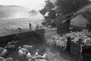 Shepherds setting out to find missing lambs by James Ravilious