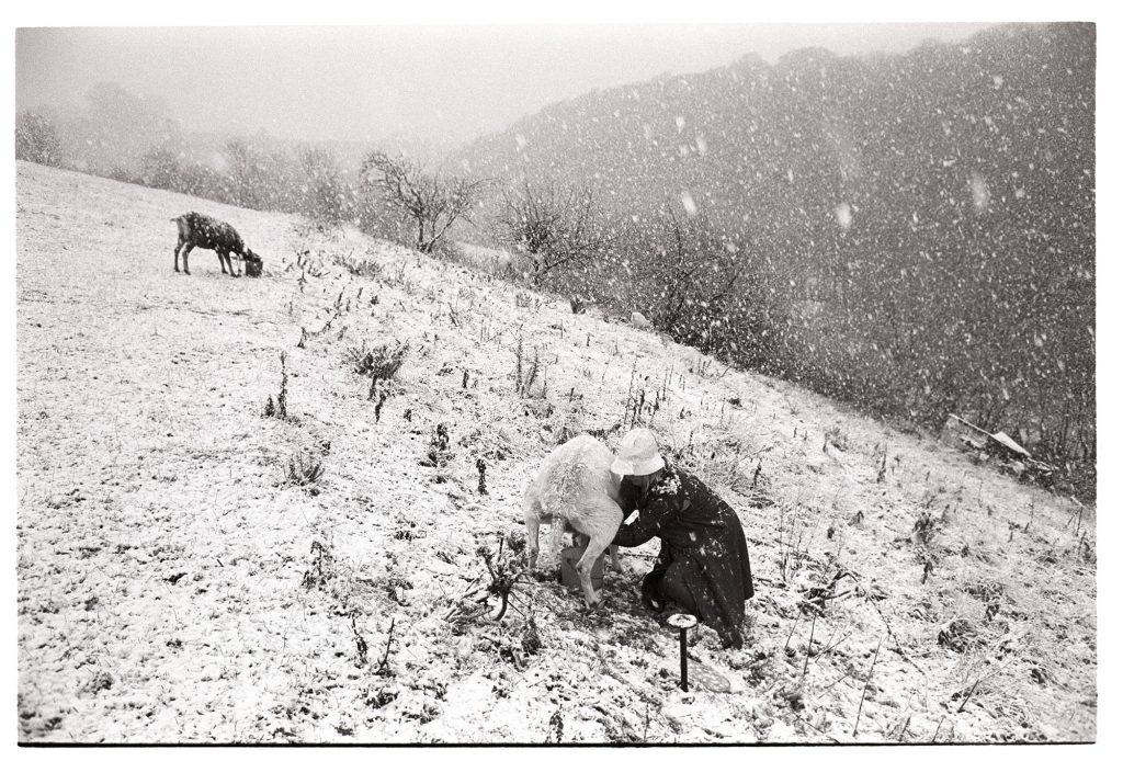 Jo Curzon milking her goat in a blizzard by James Ravilious