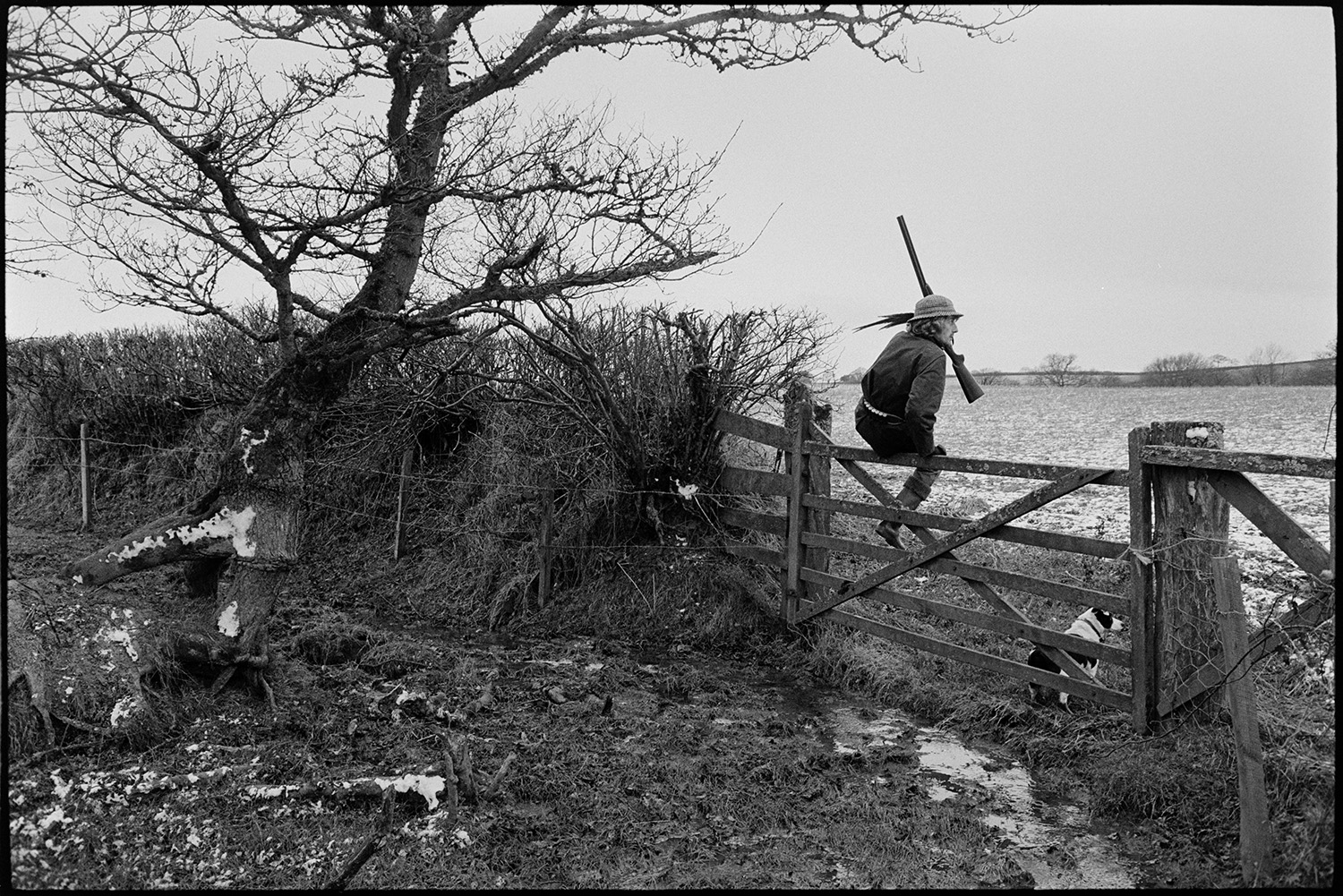 Men shooting in snowy land climbing gate with guns and dog.<br /> [A man, wearing a feather in his hat and carrying a gun, climbing over a gate on a shoot near Winkleigh. His dog is waiting for him by the gate. A tree with a dusting of snow is next to the gate.]