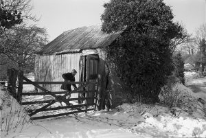 Corrugated cow shed by James Ravilious