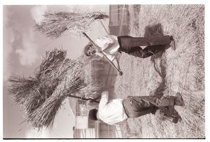 Reedcombing: men feeding wheat sheaves into the machine from a rick by James Ravilious