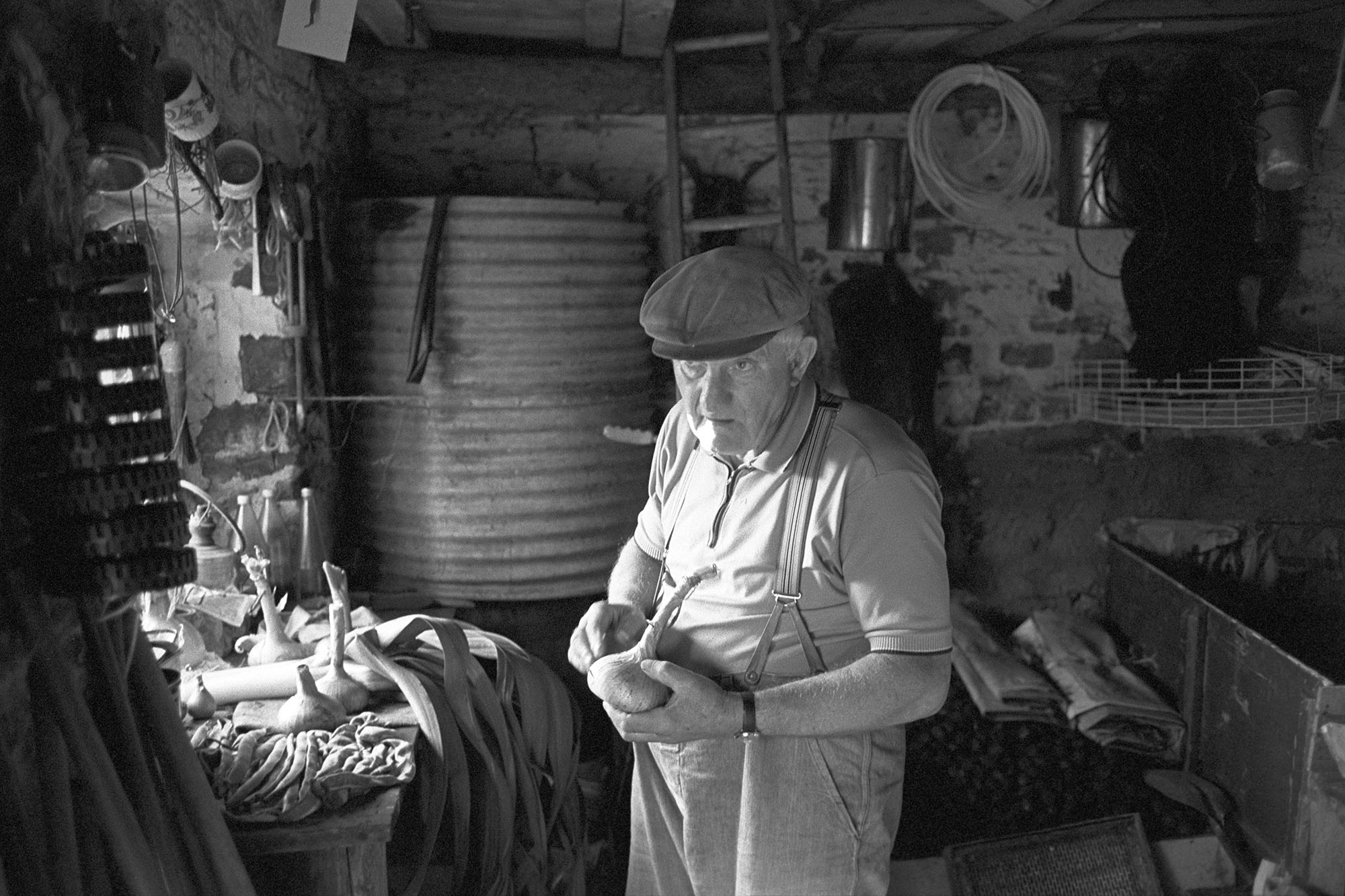 Man preparing vegetables for flower show in garden shed, onions. <br /> [Lloyd Mitchell sorting vegetables for the Dolton Flower Show in his shed at Pear Tree Cottage, Aller Road, Dolton. He is holding an onion. Leeks and runner beans can be seen on a table in the shed.]