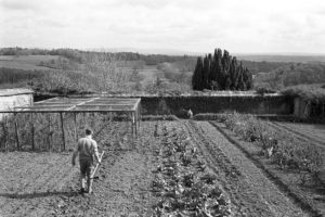 The Kitchen garden by James Ravilious